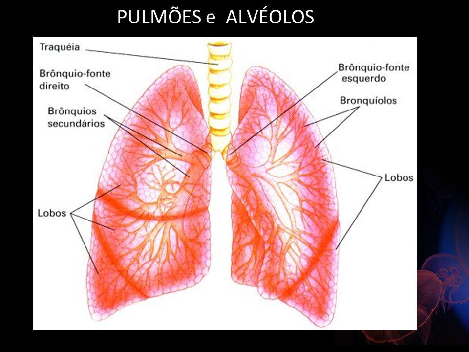 PULMÕES e ALVÉOLOS