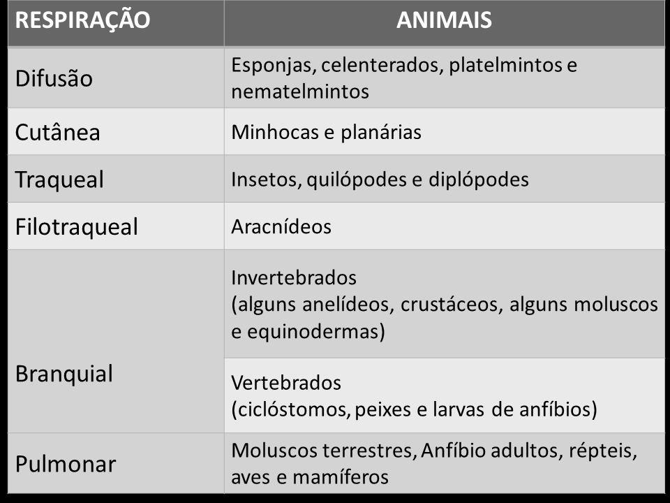 RESPIRAÇÃO ANIMAIS Difusão Cutânea Traqueal Filotraqueal Branquial