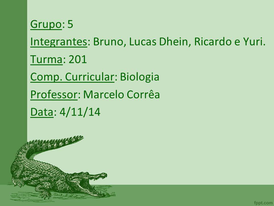 Grupo: 5 Integrantes: Bruno, Lucas Dhein, Ricardo e Yuri. Turma: 201. Comp. Curricular: Biologia.