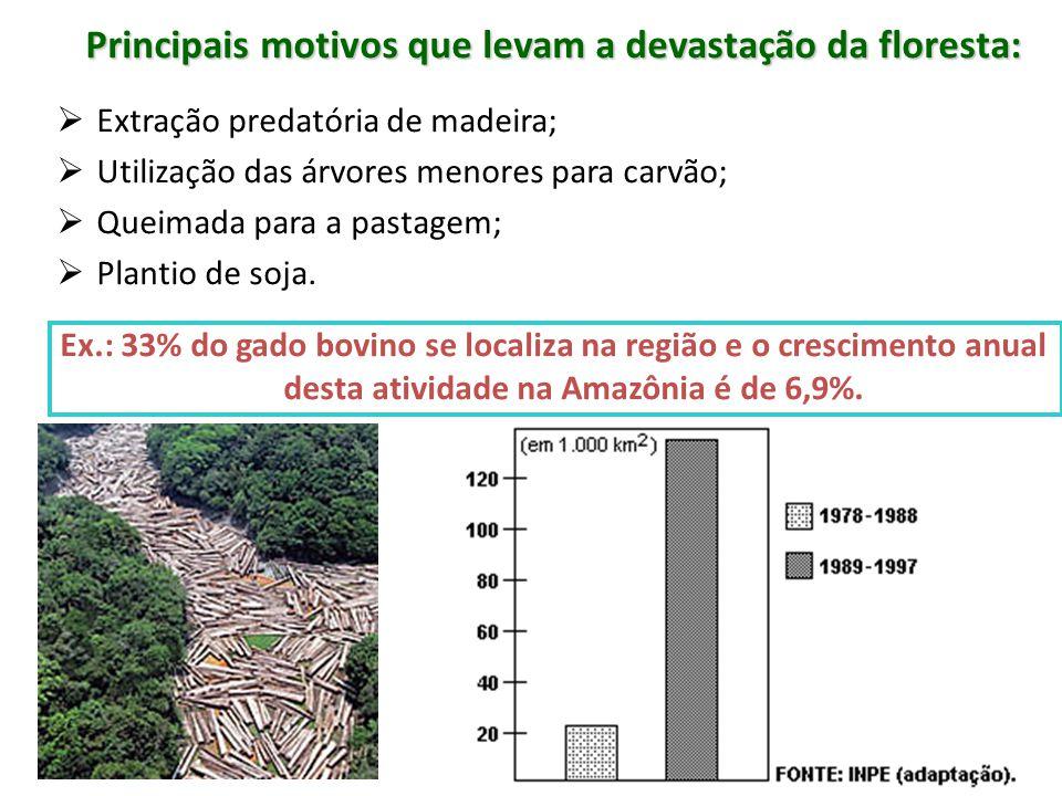 Principais motivos que levam a devastação da floresta: