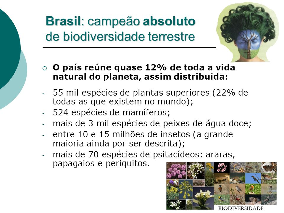 Brasil: campeão absoluto de biodiversidade terrestre