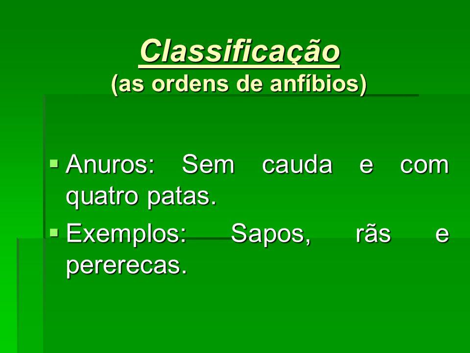 Classificação (as ordens de anfíbios)
