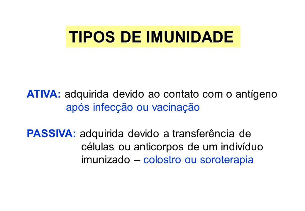 TIPOS DE IMUNIDADE ATIVA: adquirida devido ao contato com o antígeno