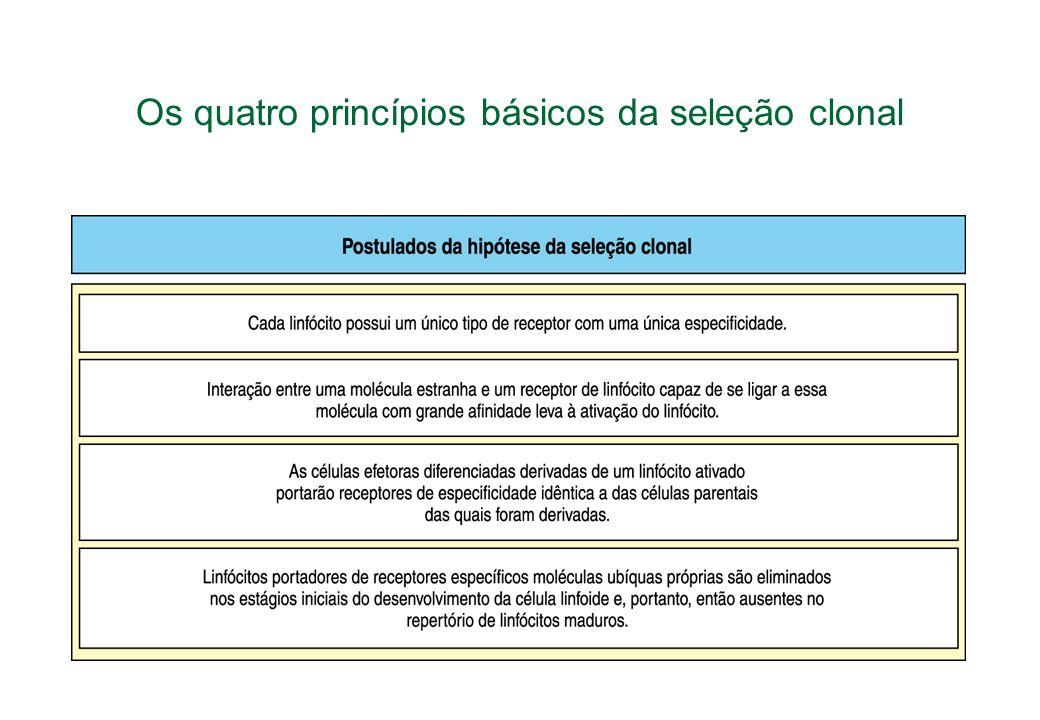 Os quatro princípios básicos da seleção clonal