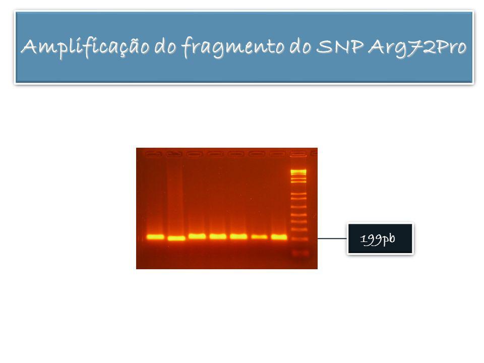 Amplificação do fragmento do SNP Arg72Pro