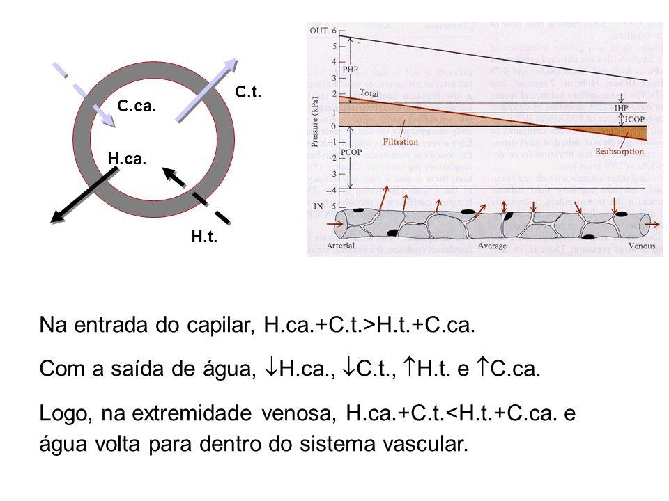 Na entrada do capilar, H.ca.+C.t.>H.t.+C.ca.