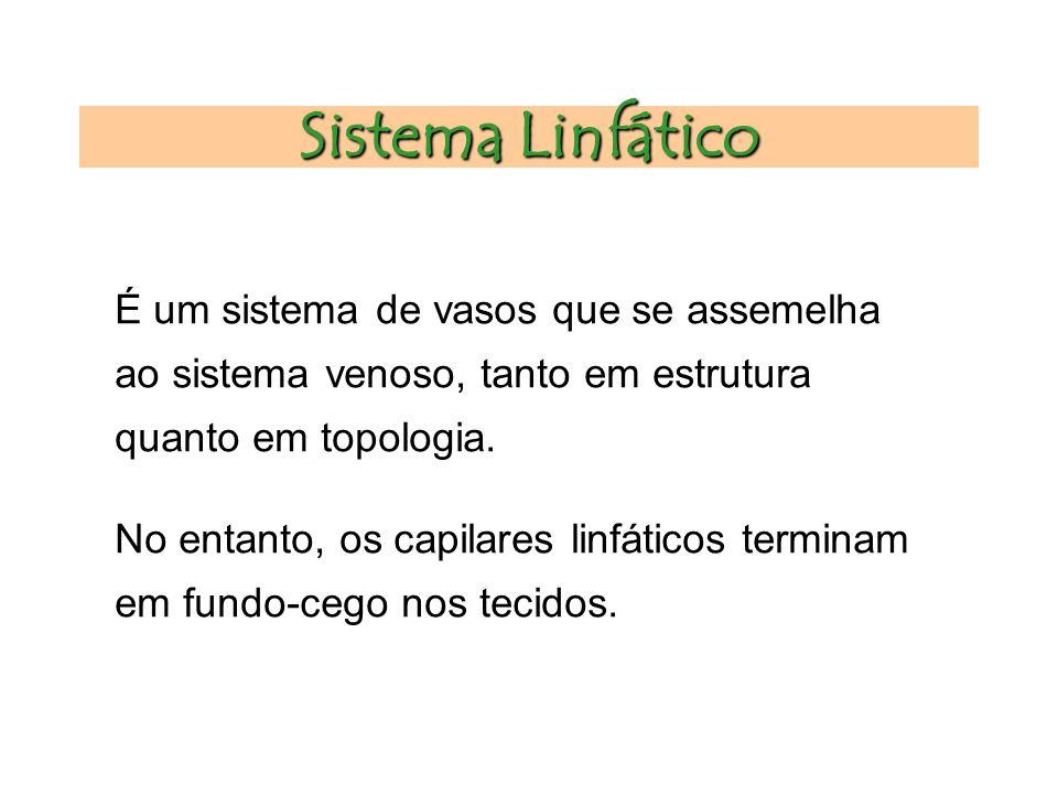 Sistema Linfático É um sistema de vasos que se assemelha ao sistema venoso, tanto em estrutura quanto em topologia.