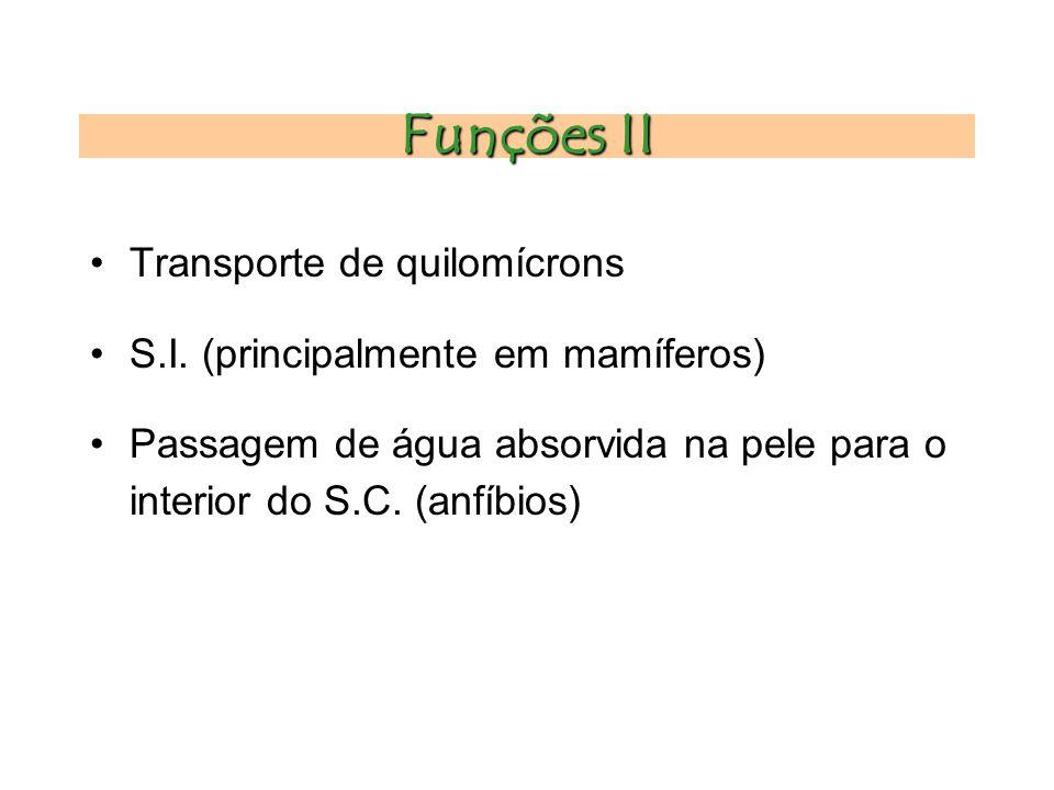 Funções II Transporte de quilomícrons