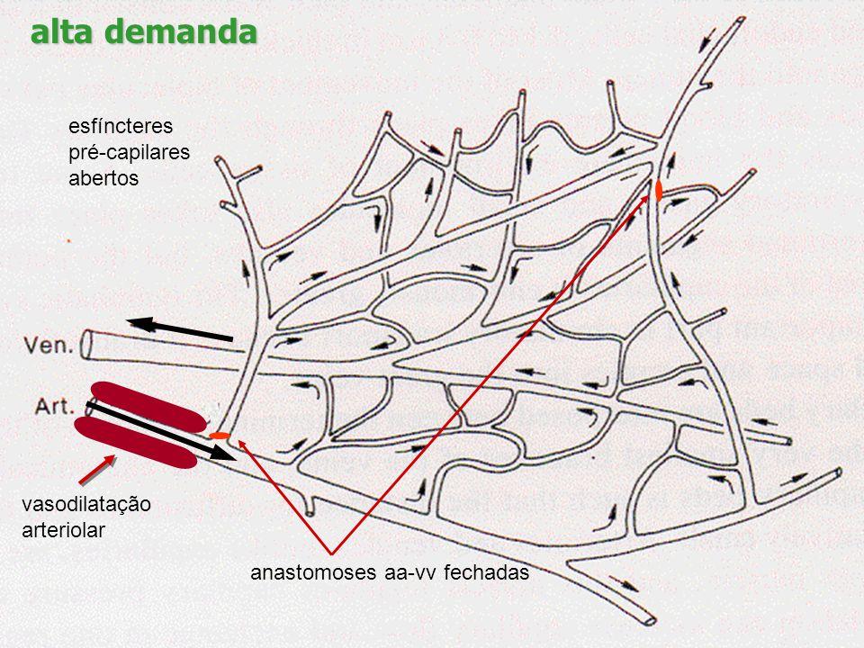 alta demanda esfíncteres pré-capilares abertos vasodilatação
