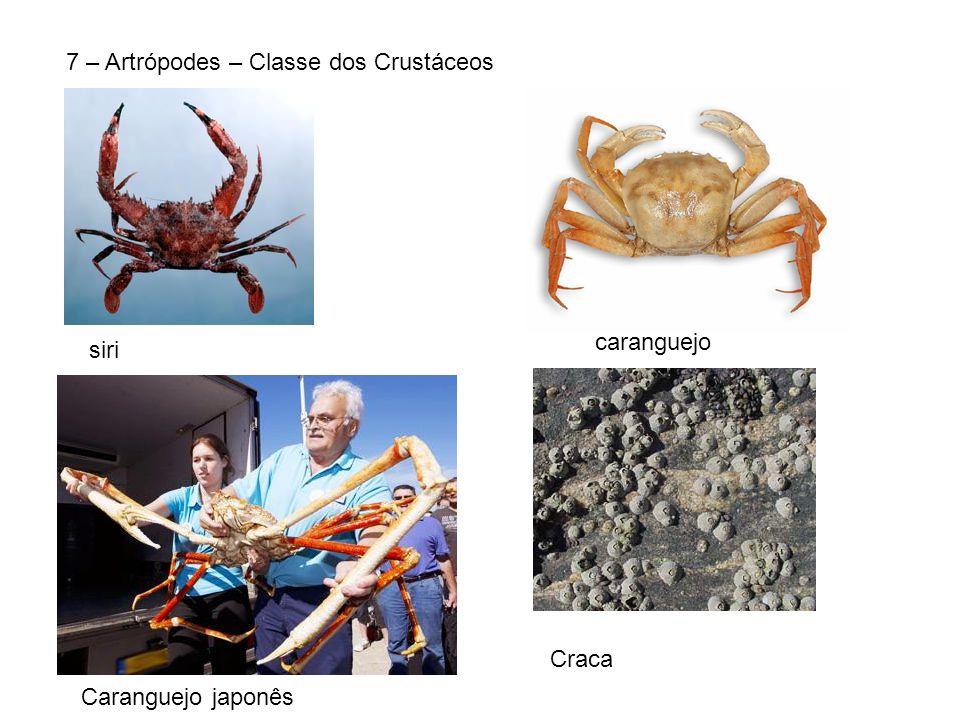7 – Artrópodes – Classe dos Crustáceos