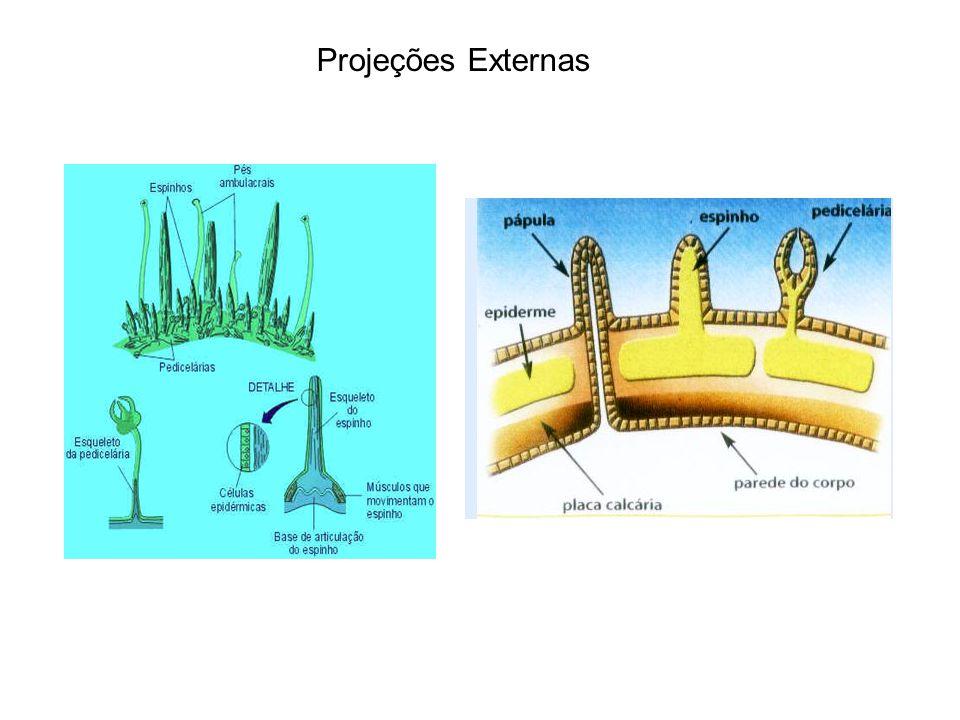 Projeções Externas