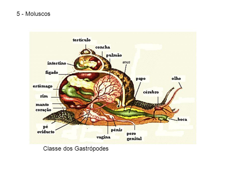5 - Moluscos Classe dos Gastrópodes