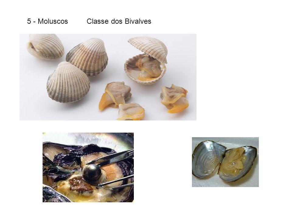 5 - Moluscos Classe dos Bivalves