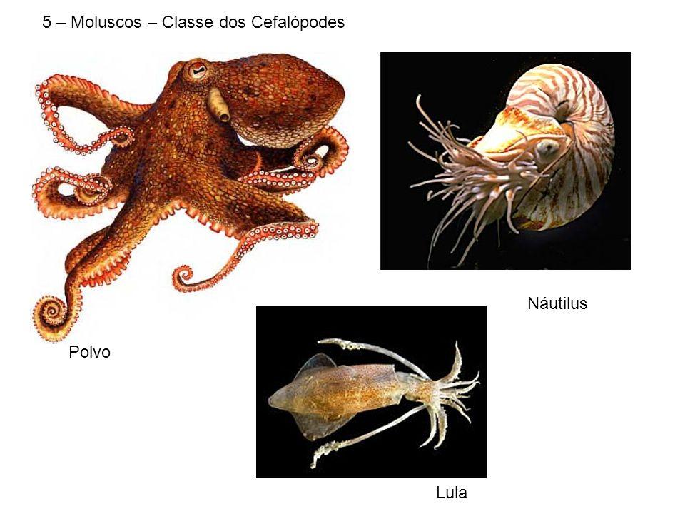 5 – Moluscos – Classe dos Cefalópodes