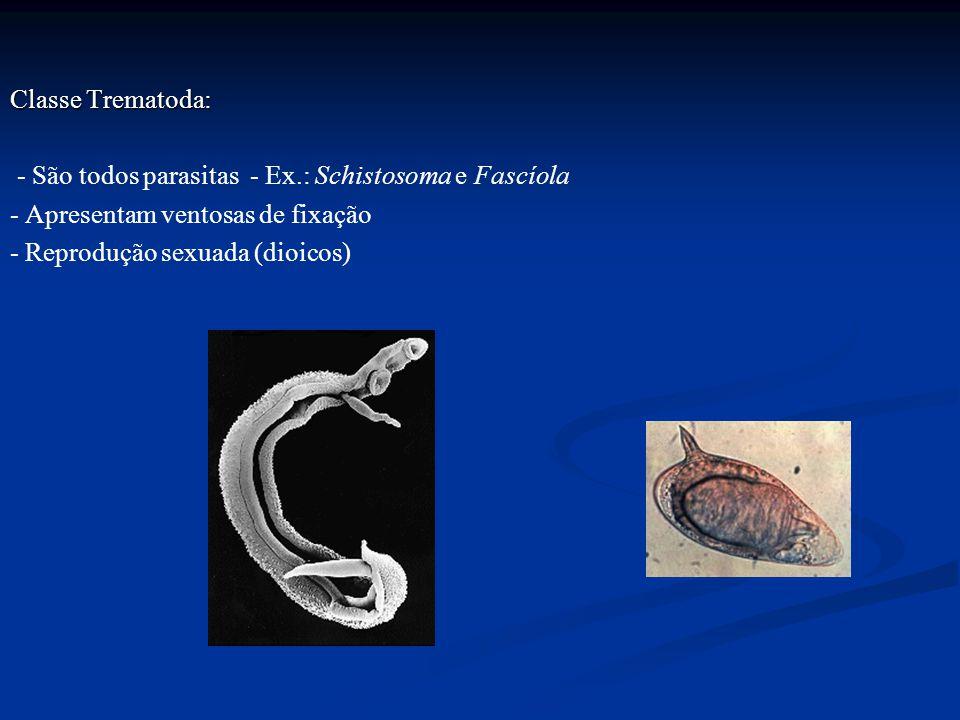 Classe Trematoda: - São todos parasitas - Ex