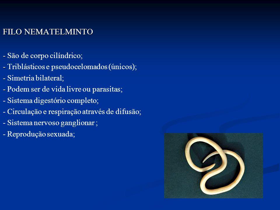 FILO NEMATELMINTO - São de corpo cilíndrico;