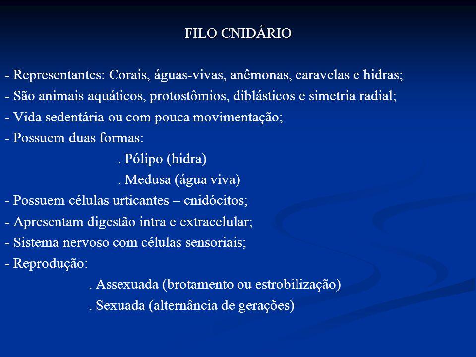 FILO CNIDÁRIO - Representantes: Corais, águas-vivas, anêmonas, caravelas e hidras; - São animais aquáticos, protostômios, diblásticos e simetria radial; - Vida sedentária ou com pouca movimentação; - Possuem duas formas: .