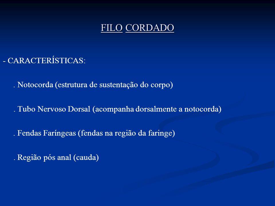 FILO CORDADO - CARACTERÍSTICAS: