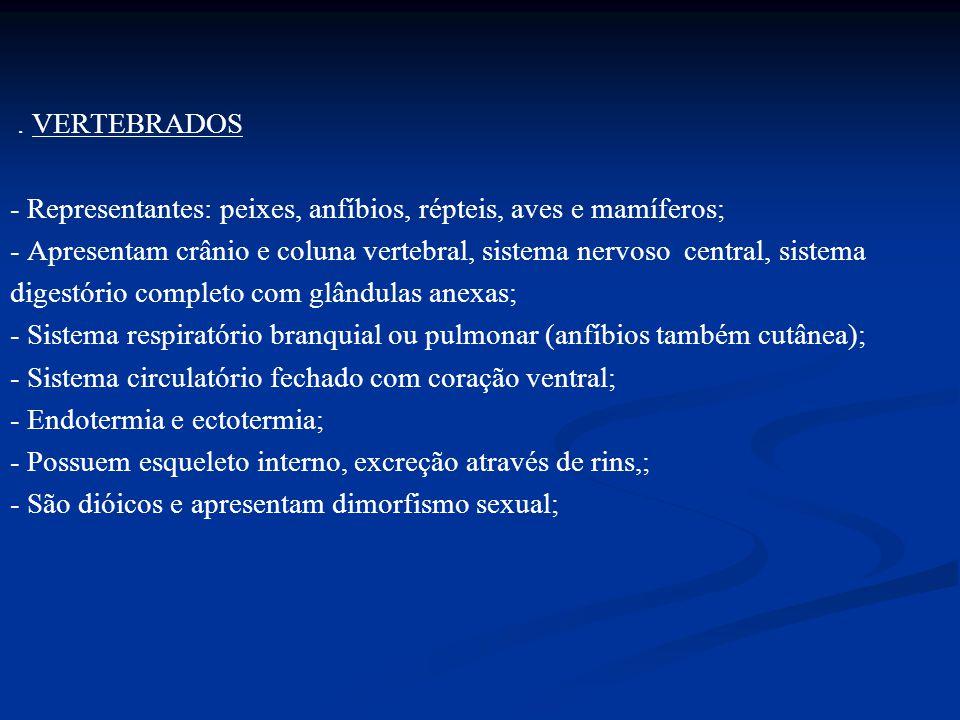 . VERTEBRADOS - Representantes: peixes, anfíbios, répteis, aves e mamíferos; - Apresentam crânio e coluna vertebral, sistema nervoso central, sistema digestório completo com glândulas anexas; - Sistema respiratório branquial ou pulmonar (anfíbios também cutânea); - Sistema circulatório fechado com coração ventral; - Endotermia e ectotermia; - Possuem esqueleto interno, excreção através de rins,; - São dióicos e apresentam dimorfismo sexual;