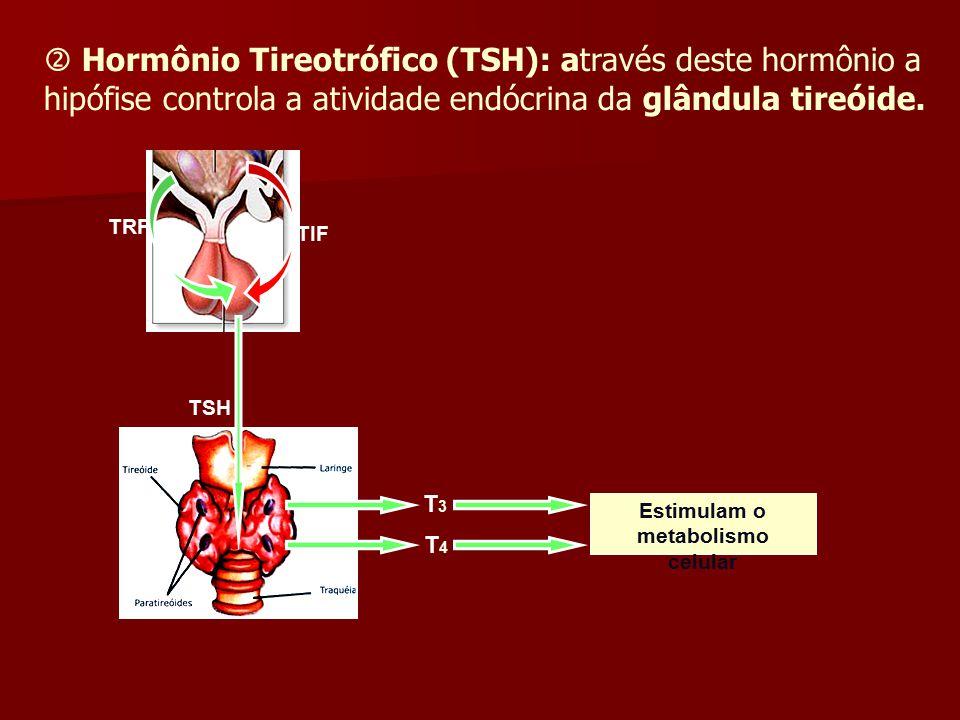 Estimulam o metabolismo celular