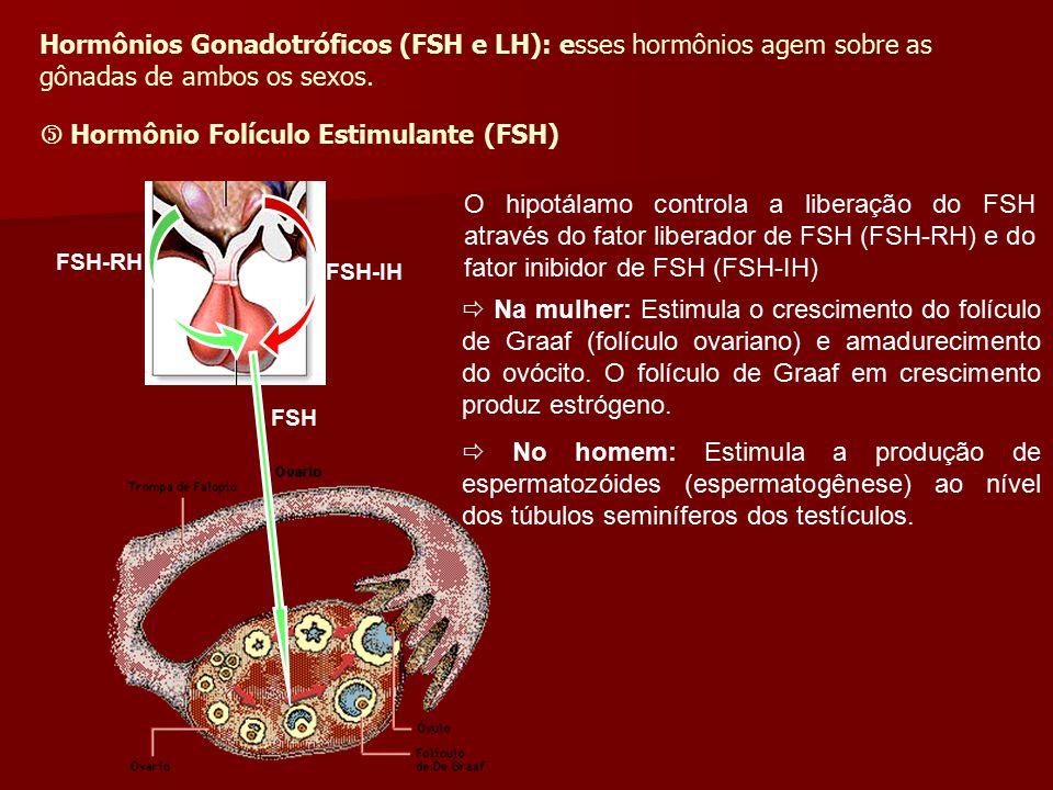  Hormônio Folículo Estimulante (FSH)