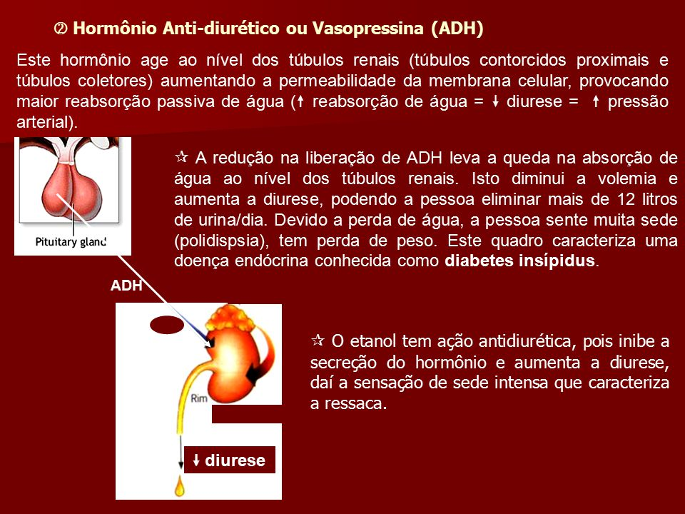  Hormônio Anti-diurético ou Vasopressina (ADH)
