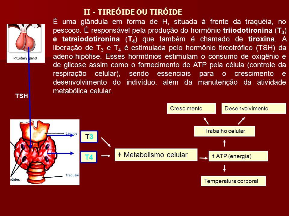 II - TIREÓIDE OU TIRÓIDE