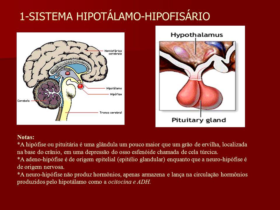 1-SISTEMA HIPOTÁLAMO-HIPOFISÁRIO