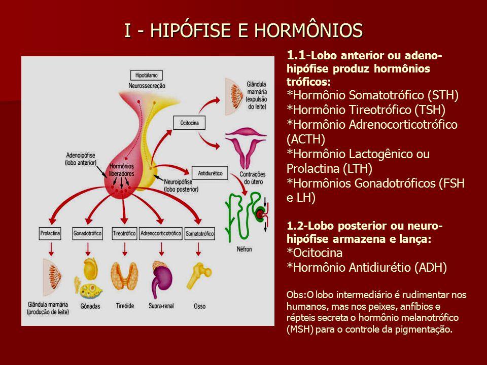 I - HIPÓFISE E HORMÔNIOS