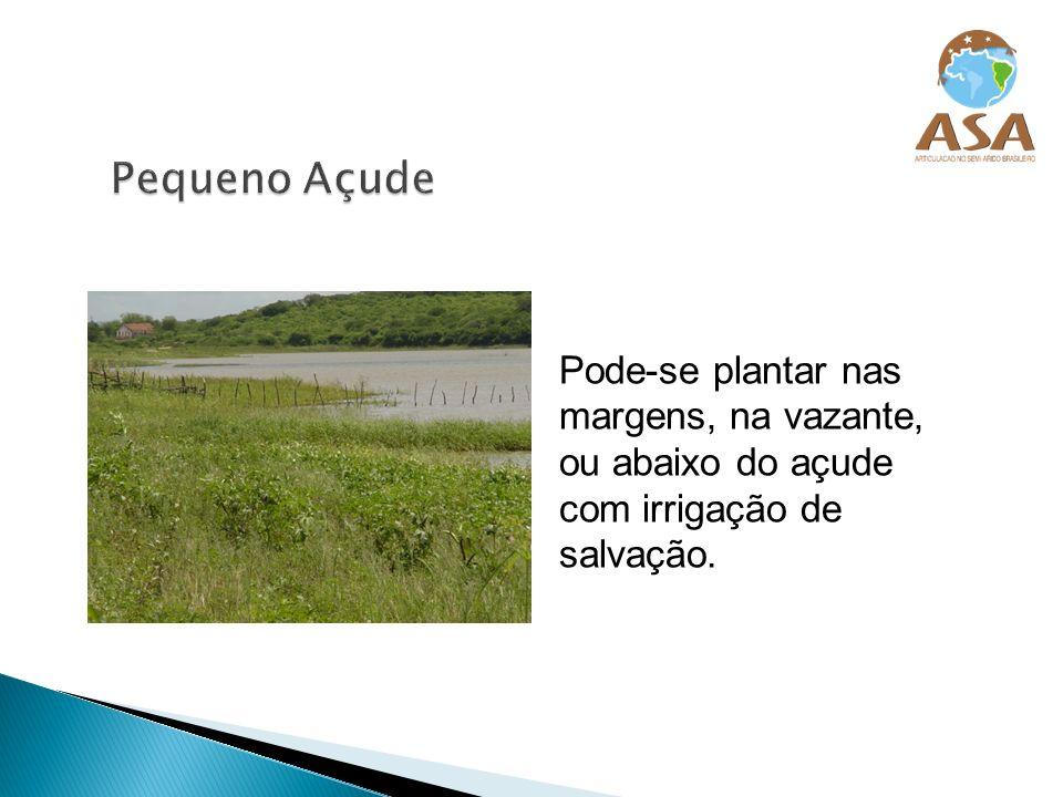 Pequeno Açude Pode-se plantar nas margens, na vazante, ou abaixo do açude com irrigação de salvação.