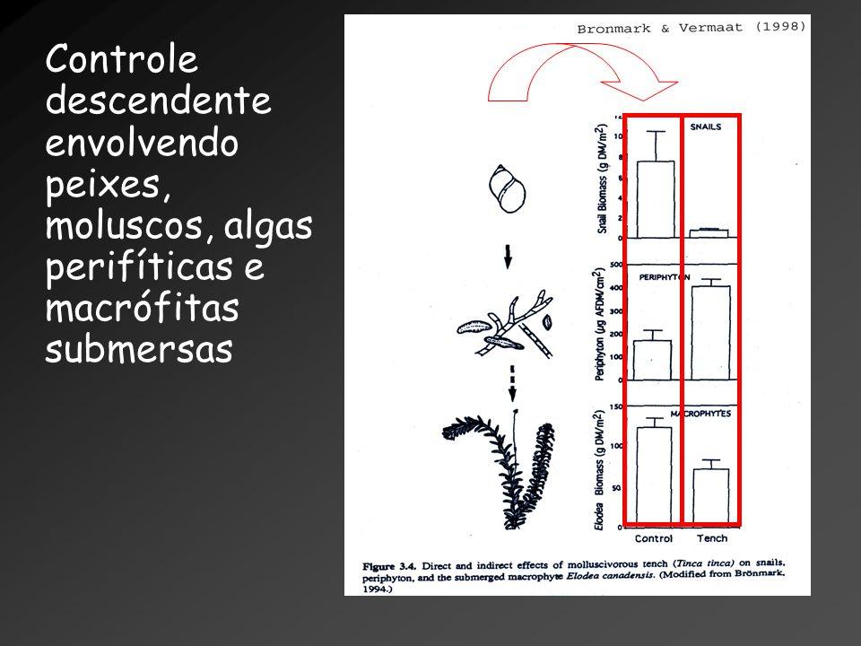 Controle descendente envolvendo peixes, moluscos, algas perifíticas e macrófitas submersas