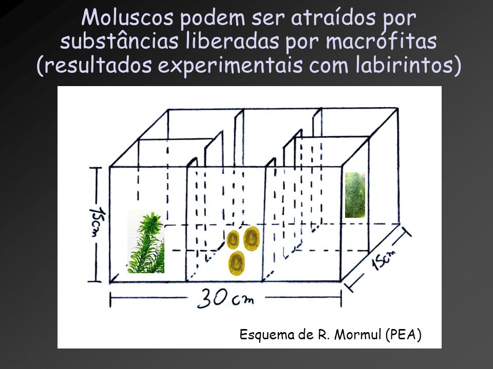 Moluscos podem ser atraídos por substâncias liberadas por macrófitas (resultados experimentais com labirintos)