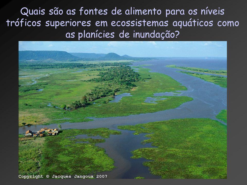 Quais são as fontes de alimento para os níveis tróficos superiores em ecossistemas aquáticos como as planícies de inundação