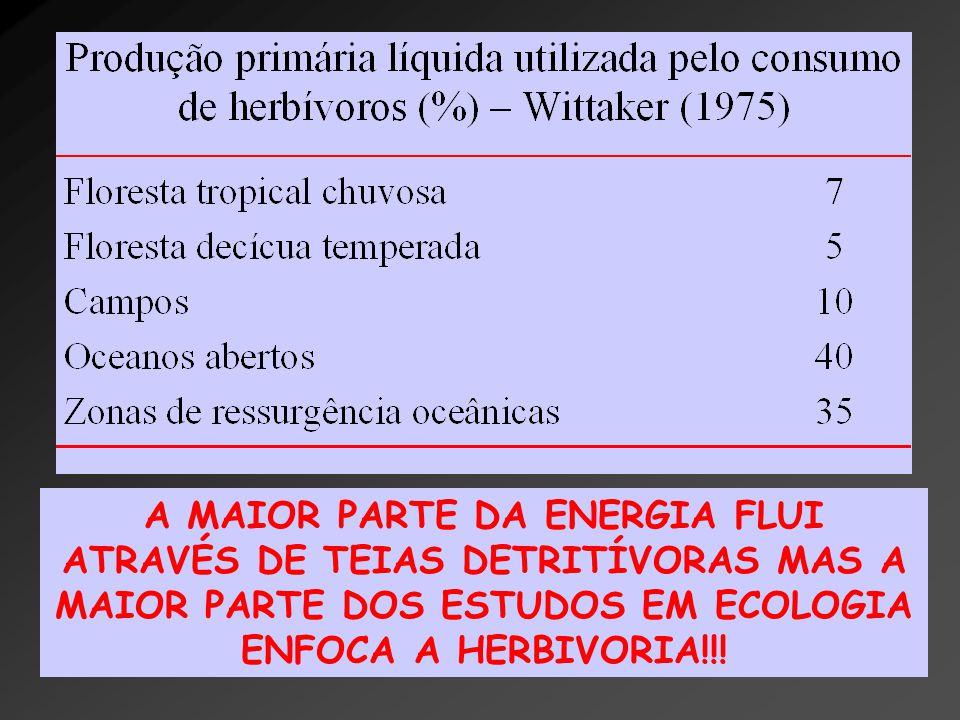A MAIOR PARTE DA ENERGIA FLUI ATRAVÉS DE TEIAS DETRITÍVORAS MAS A MAIOR PARTE DOS ESTUDOS EM ECOLOGIA ENFOCA A HERBIVORIA!!!