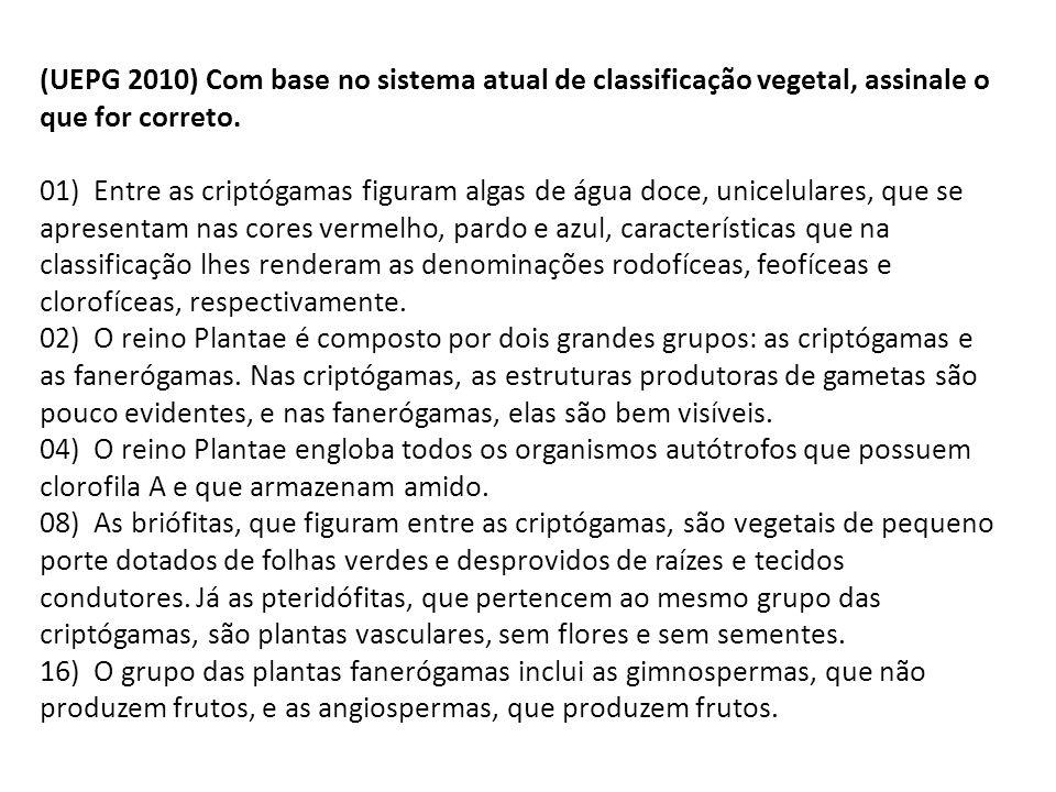 (UEPG 2010) Com base no sistema atual de classificação vegetal, assinale o que for correto.