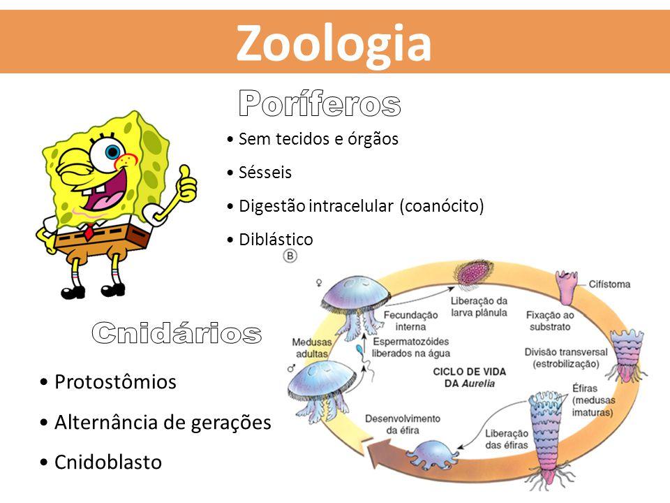 Zoologia Poríferos Cnidários Protostômios Alternância de gerações