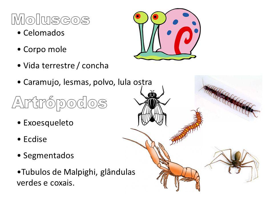 Moluscos Artrópodos Celomados Corpo mole Vida terrestre / concha