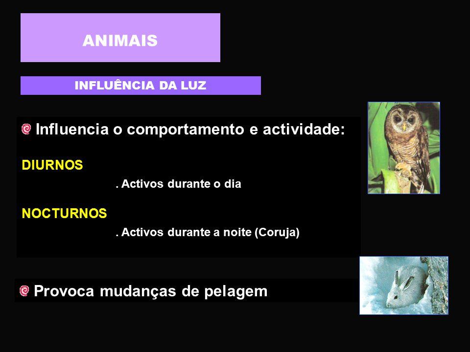 Influencia o comportamento e actividade: