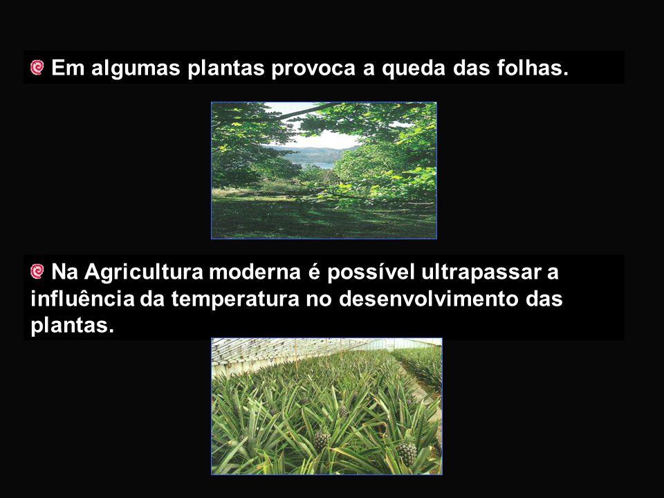 Em algumas plantas provoca a queda das folhas.