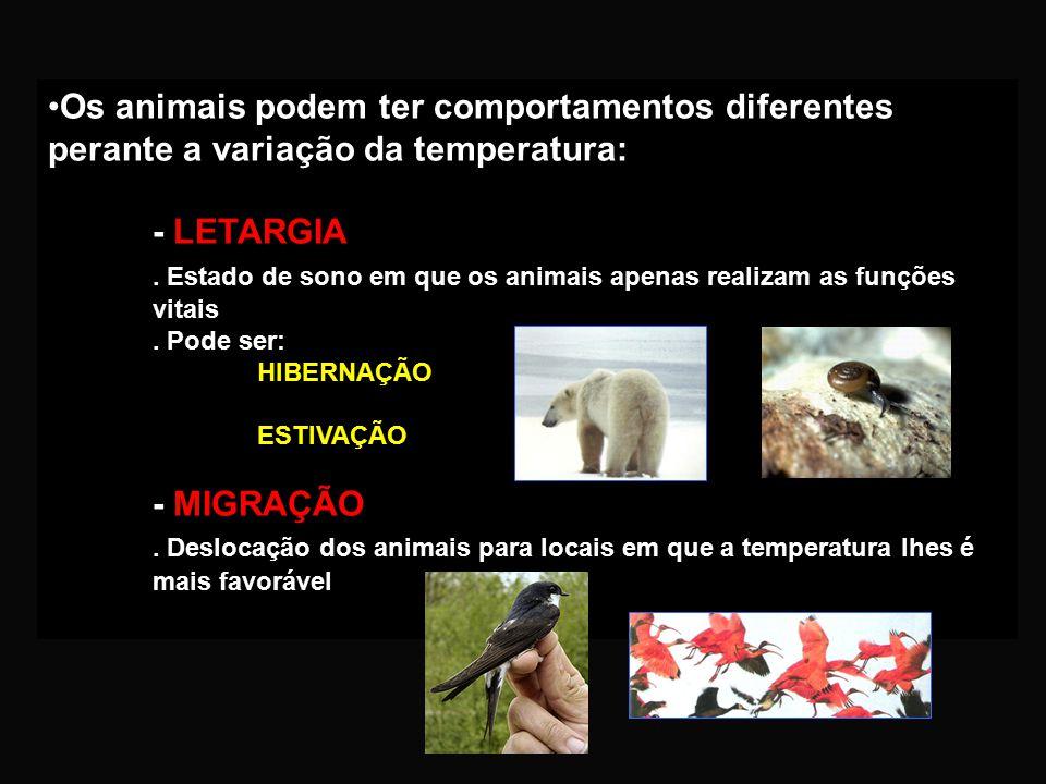 . Estado de sono em que os animais apenas realizam as funções vitais