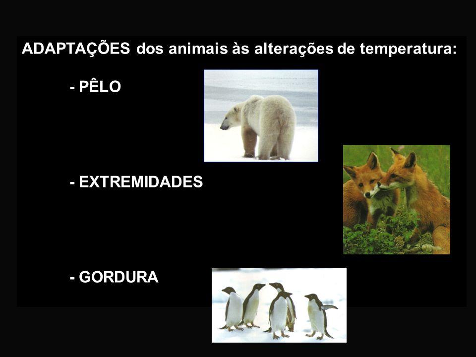 ADAPTAÇÕES dos animais às alterações de temperatura: