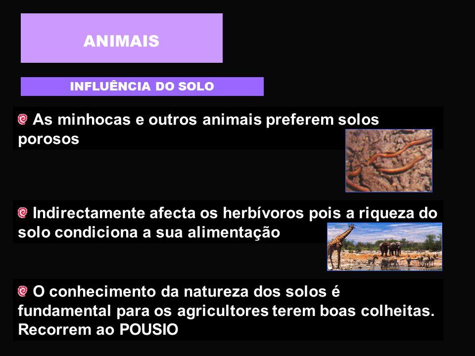 As minhocas e outros animais preferem solos porosos