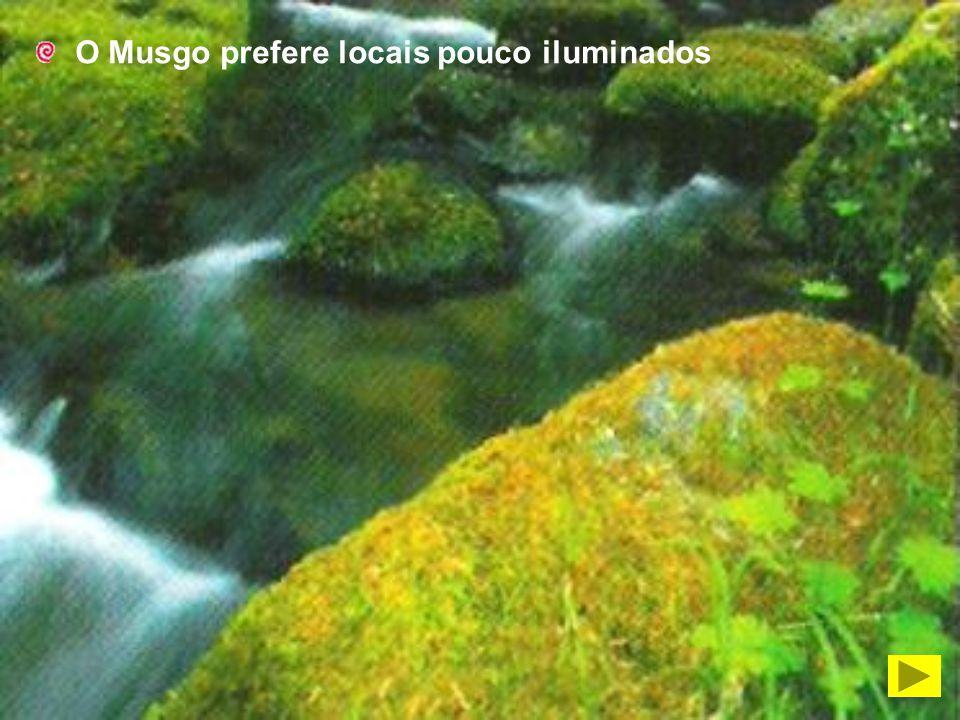 O Musgo prefere locais pouco iluminados