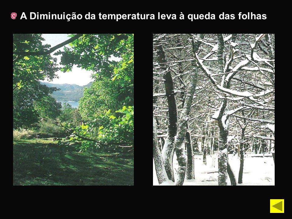 A Diminuição da temperatura leva à queda das folhas