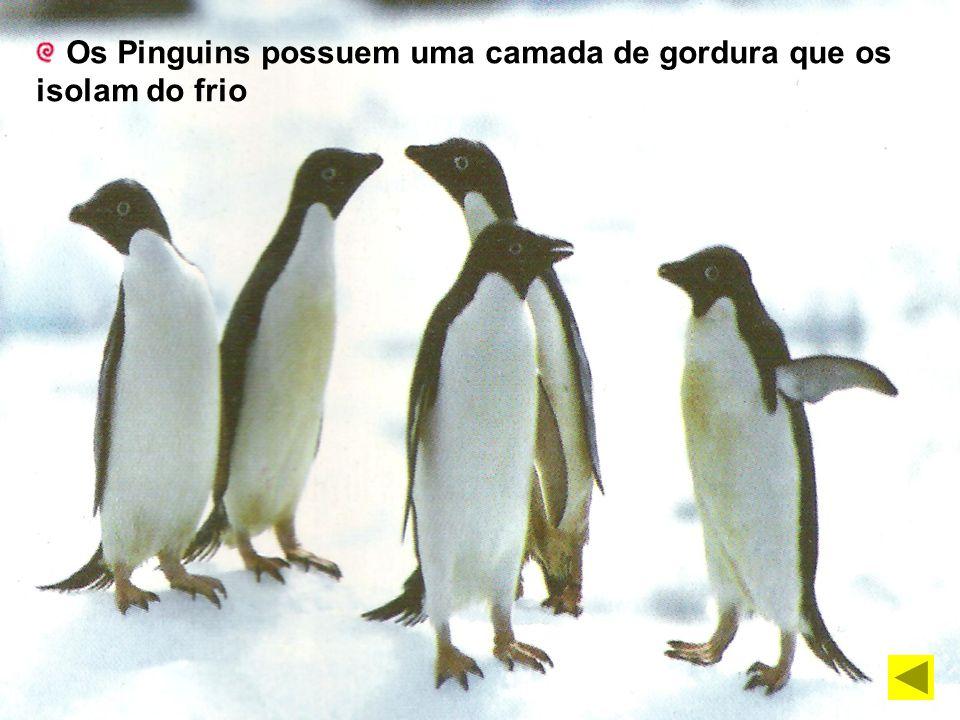 Os Pinguins possuem uma camada de gordura que os isolam do frio