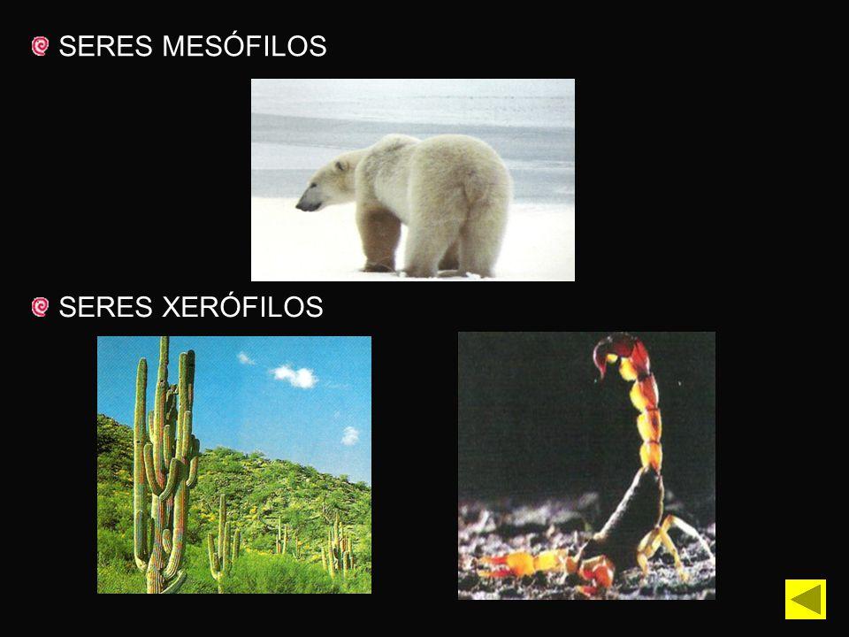 SERES MESÓFILOS SERES XERÓFILOS