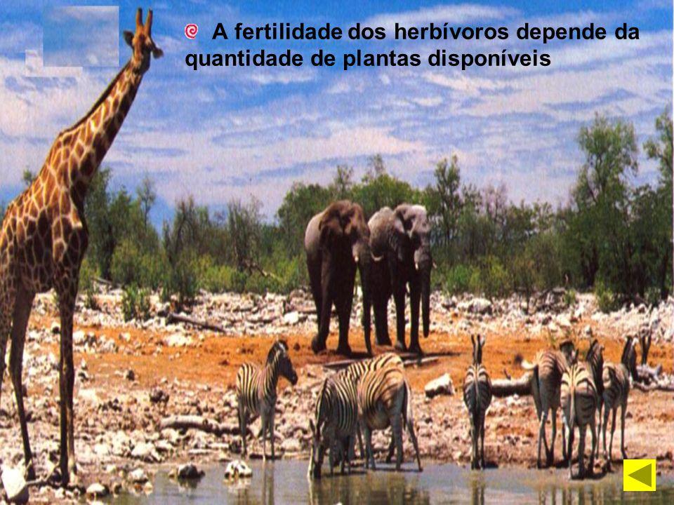 A fertilidade dos herbívoros depende da quantidade de plantas disponíveis