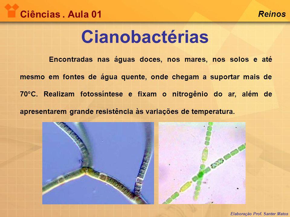 Cianobactérias Ciências . Aula 01 Reinos