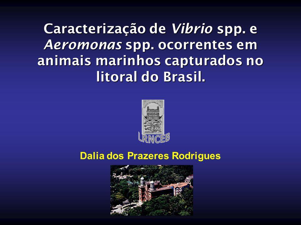 Dalia dos Prazeres Rodrigues
