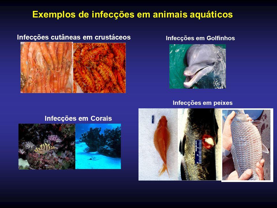 Infecções em Golfinhos